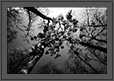 Sunlight through Canopy | bw Fine Art Nature Photography
