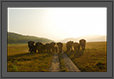 Elephants - Charging Squad of Corbett National Park, India | color Fine Art Nature Photography
