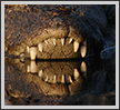 Crocodile's Mouth  | color Fine Art Nature Photography
