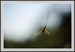 Blurs of Dragonfly | Fine Art Nature Photography