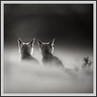 Indian Fox Cubs, Little Runn of Kutch India | creative_visions Fine Art Nature Photography