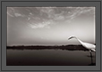 Entry of an Egret in Black and White | avian Fine Art Nature Photography