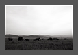 Elephants in Grassland of Corbet | bw Fine Art Nature Photography