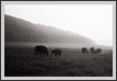 Elephants in Grassland  | fauna Fine Art Nature Photography