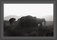 Elephants at Sunset | creative_visions Fine Art Nature Photography