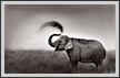 Elephant Mudbath | fauna Fine Art Nature Photography