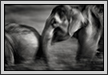 Elephants Play | abstract Fine Art Nature Photography