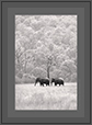 Elephants at Corbet National Park | fauna Fine Art Nature Photography