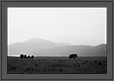 Elephants in grassland | bw Fine Art Nature Photography