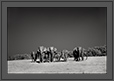 Elephants group at Corbet National Park, India | creative_visions Fine Art Nature Photography