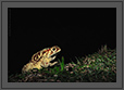 Frog at Night | macro Fine Art Nature Photography