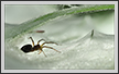 Funnel Spider in Grass | color Fine Art Nature Photography