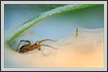 Funnel Spider | color Fine Art Nature Photography