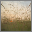 Sunrise in grassland | landscape Fine Art Nature Photography