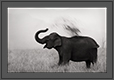 Elephant Taking Mud bath | creative_visions Fine Art Nature Photography
