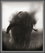 Elephant mud bath in monotone | fauna Fine Art Nature Photography