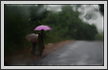 Monsoon Rain | color Fine Art Nature Photography