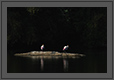 Painted Storks | creative_visions Fine Art Nature Photography