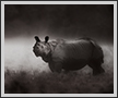 Rhino  | fauna Fine Art Nature Photography