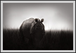 Rhino, Kaziranga National Park, India | fauna Fine Art Nature Photography