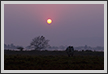 Sunrise and Rhino, Kaziranga National Park | fauna Fine Art Nature Photography