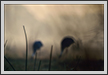 Sarus Dream | abstract Fine Art Nature Photography