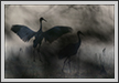 Sarus Duo | abstract Fine Art Nature Photography