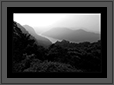 Sharavathi Valley - Jungles   | bw Fine Art Nature Photography