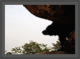 Sloth Bear - a perspectiveLook | daroji Fine Art Nature Photography