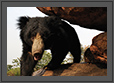 Bear - EyesLook | fauna Fine Art Nature Photography