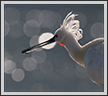 Spoonbill  - A Perspective | color Fine Art Nature Photography