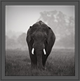 Tusker in monotone | creative_visions Fine Art Nature Photography