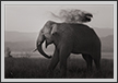 Tusker and Rain  | creative_visions Fine Art Nature Photography