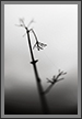 Missed Monsoon - 1 | bw Fine Art Nature Photography