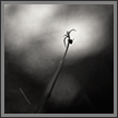 Dreams - 3 | bw Fine Art Nature Photography