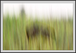 Grassland and Boar  | creative_visions Fine Art Nature Photography