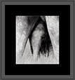 Elephant - Young One | bw Fine Art Nature Photography